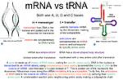 RNA-Based Therapeutics And Vaccines